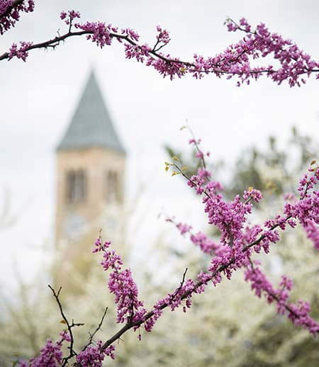 Flowering tree with McGraw Tower in background