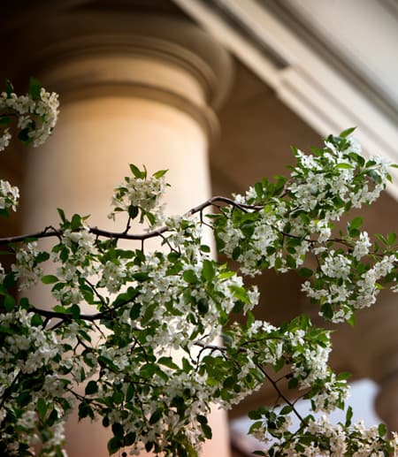 Flowering tree in front of a column